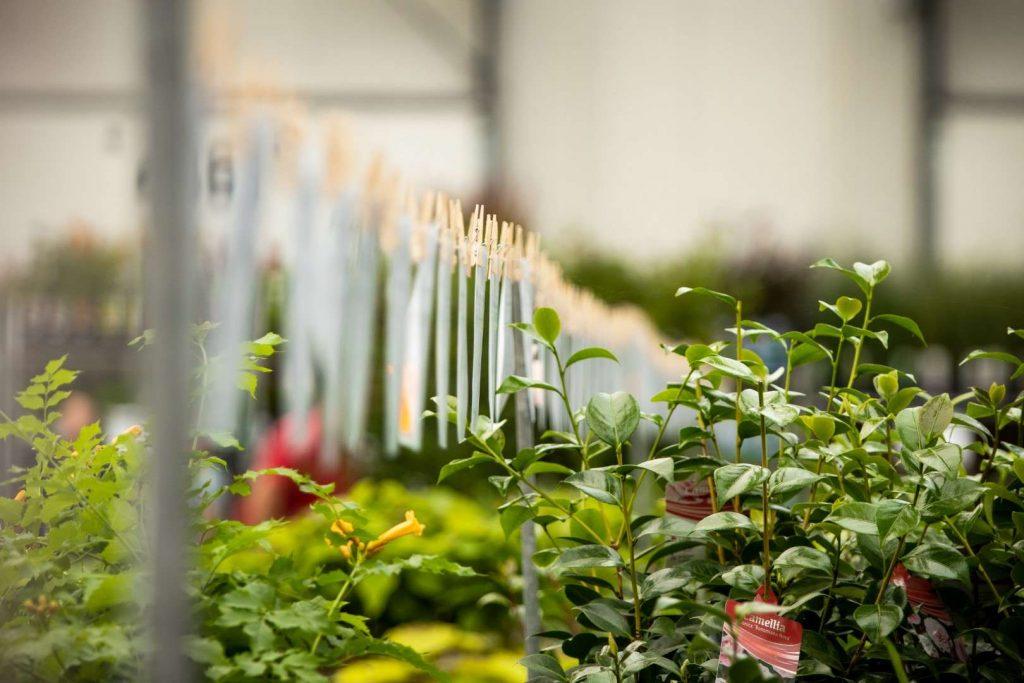 close up tuinplanten beurs