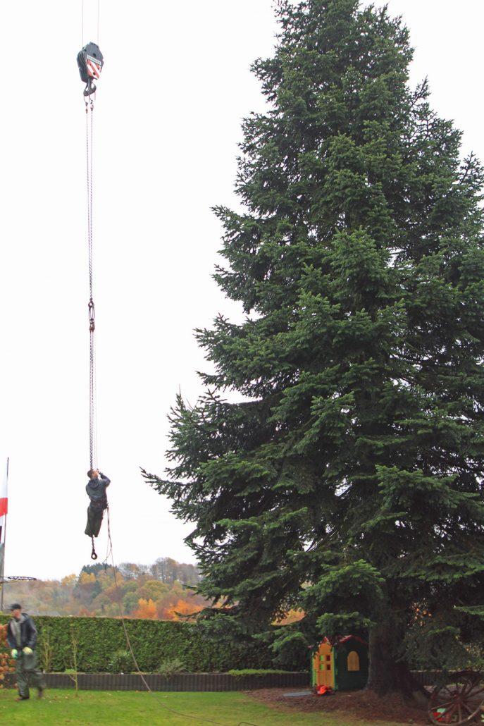 GROEN-Direkt KerstbomenXL-Rooien2-687x1030