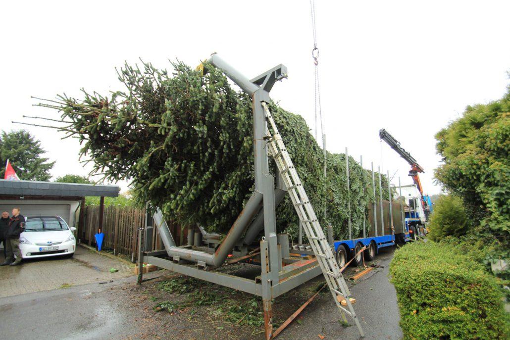 GROEN-Direkt KerstbomenXL-Transport3-1030x687