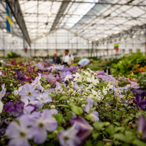 GROEN-Direkt Boskoop Garten-Pflanzen (3)