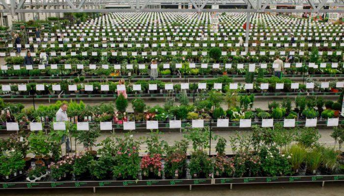 GROEN-Direkt Autumn plant fair plant purchase sale wholesale distributor ornamental shrubs perennials (4)