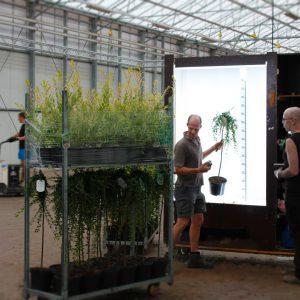 GROEN-Direkt actuele plantenfotos