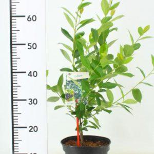 GROEN-Direkt constante hoge kwaliteit tuinplanten (Klein)