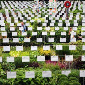 GROEN-Direkt-honderden-kwekers-plantenaanbod